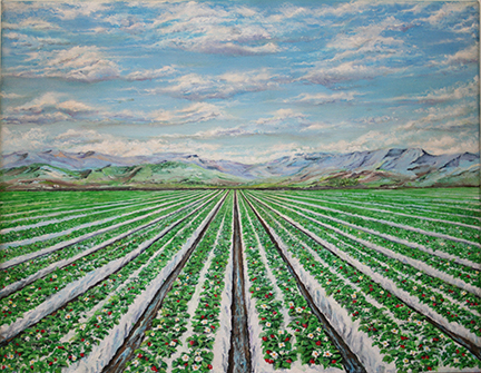 CALIFORNIA STRAWBERRY FIELDS